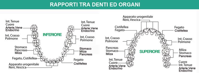 rapporto-tra-denti-e-organi