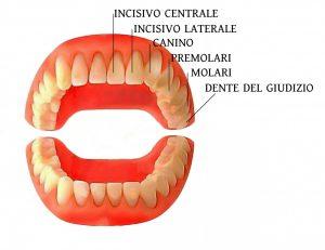 quali-denti-abbiamo