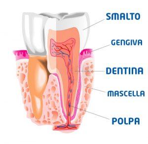 denti-sensibili-dentina