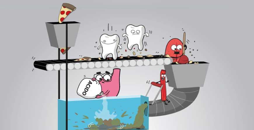 denti-e-stomaco-michelangelo-13